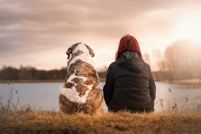 Hundkompis